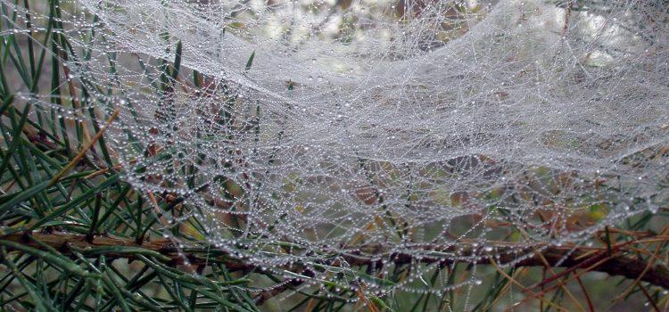 Web with raindrops
